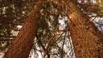 http://www.growingforest.net/files/dimgs/thumb_3x150_1_47_206.jpg