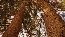 http://www.growingforest.net/files/dimgs/thumb_3x225_7_47_206.jpg