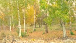 http://www.growingforest.net/files/dimgs/thumb_3x250_1_45_233.png