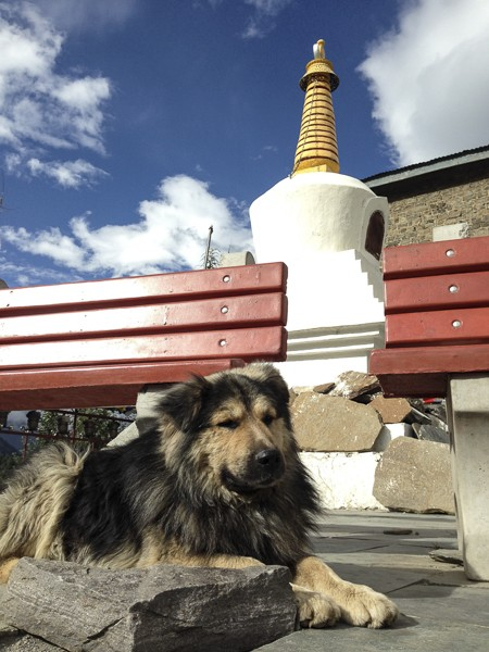 http://www.growingforest.net/files/gimgs/th-24_HundSpiti.jpg