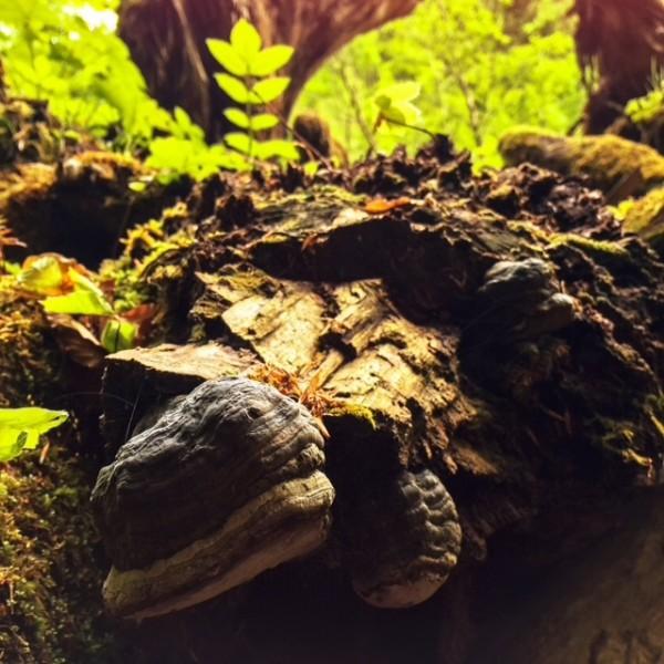http://www.growingforest.net/files/gimgs/th-47_mushroom.jpg