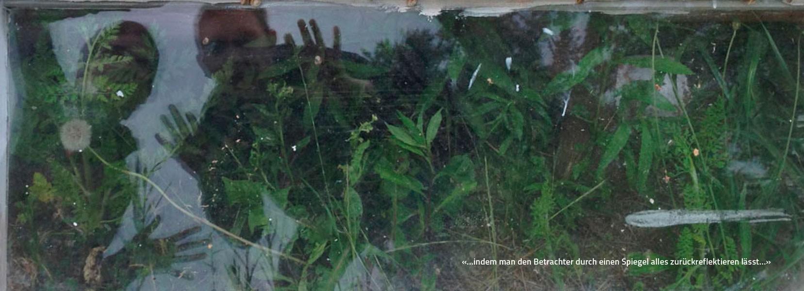 http://www.growingforest.net/files/gimgs/th-51_Ieva&Senso_Lichtenberg15-600px.jpg